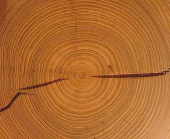 cedar checking